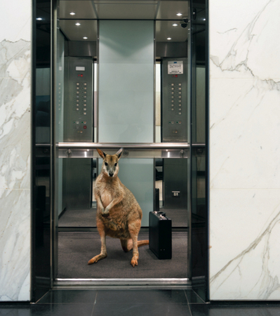 Sydney Wildlife World, M&C Saatchi, Adrian Cook Photography : Production & Location : fiona watson production